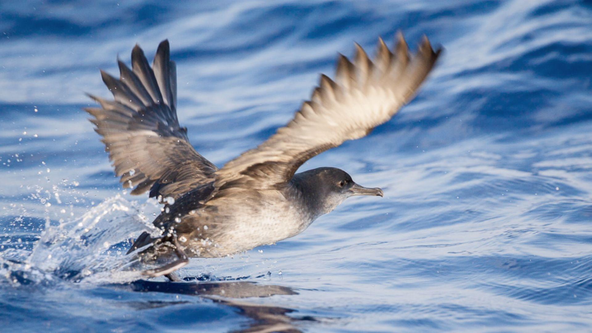 Muestra de la fauna terrestre del archipiélago de Cabrera