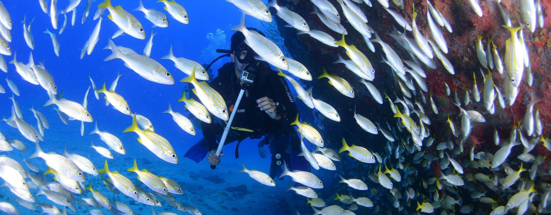Turista buceando en Don Pedro (Ibiza) rodeado de peces